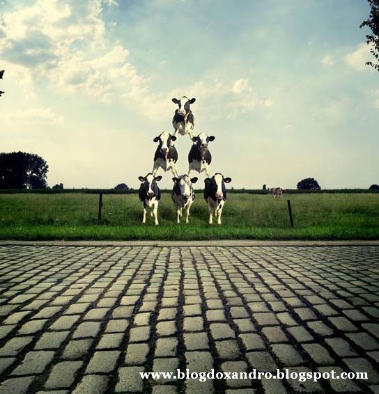[torre-de-vacas.jpg]