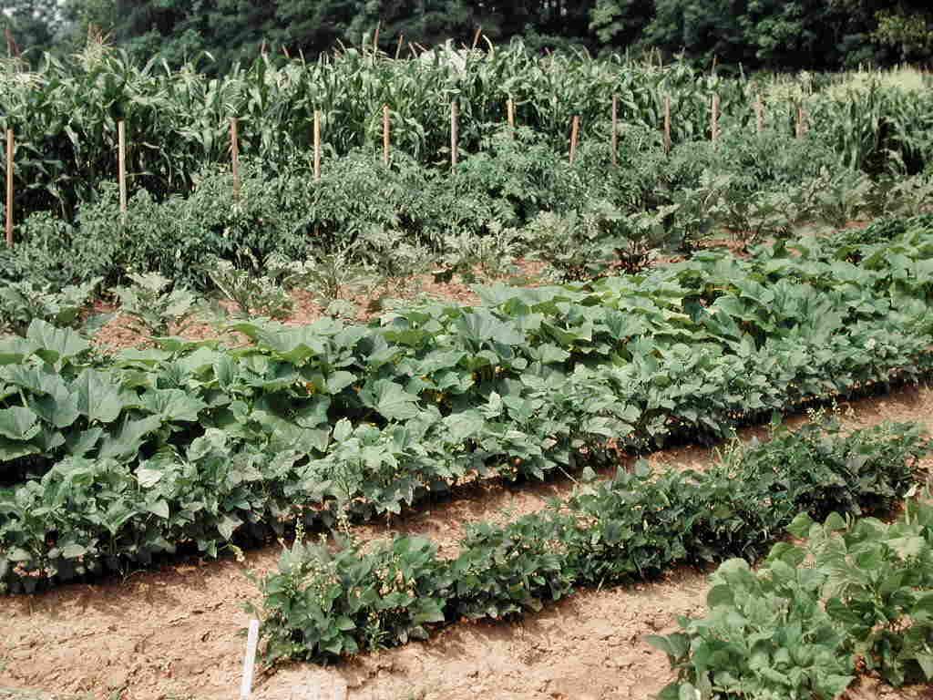 home vegetable gardening.