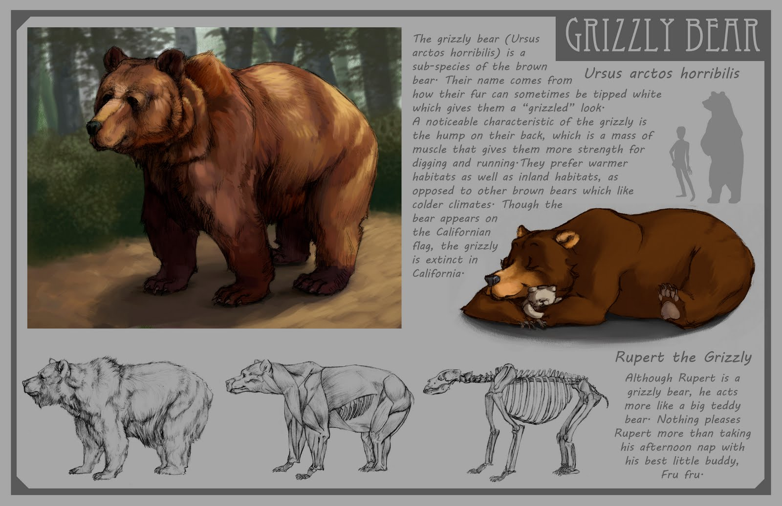 Chelsea Loren Edwards Sketchblog: Grizzly Bear