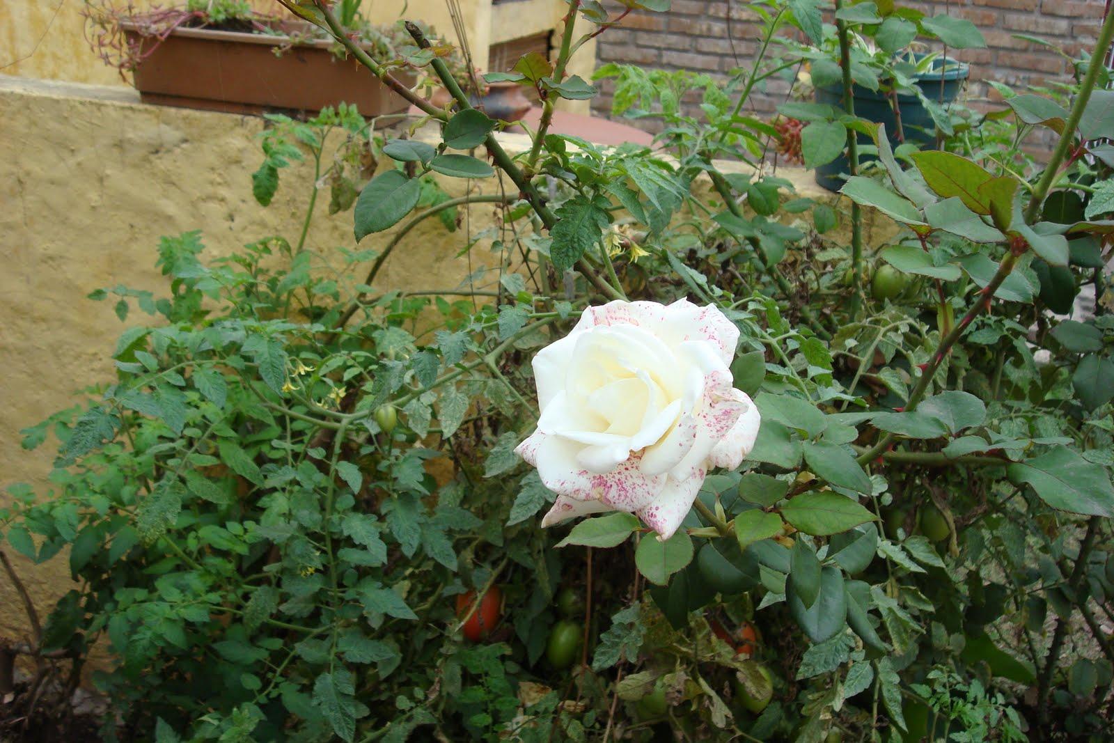 Taller el libro de arena rosas y tomates amor en el jard n for Amor en el jardin