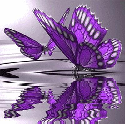 kupu-kupu yang cantik