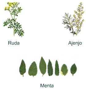 Las maravillas de las plantas importancia de las plantas for Tipos de hierbas medicinales