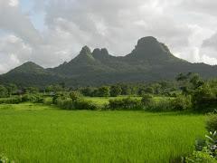 हिरवे हिरवे गार गालिचे