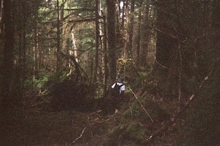 old growth forests are fun!