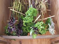 Healing Herbs Photo