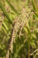 Garden Seeds Image