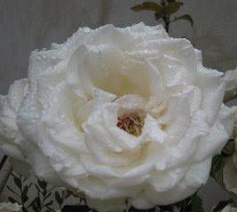 Regalo de Mi Chica.(Sentada en el sofá) http://saludin.blogspot.com/