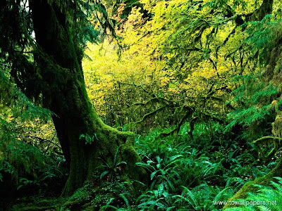 forest wallpaper. Beauty of Rain Forests - Going