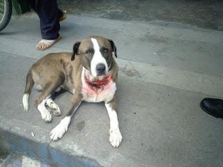 Investigacion: Maltrato hacia animales