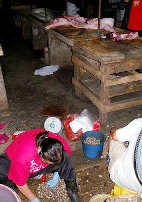 babi haram makan babi darah babi