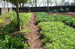 Oficina de Horta e Jardinagem
