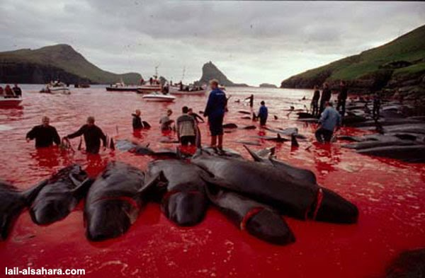 dolphins-holocaust-2.jpg (600×393)