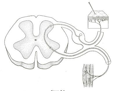 anatomy  u0026 physiology at ycp