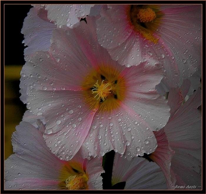 Картинки аватарки цветы - мноооого ...: www.liveinternet.ru/users/4752823/post217881427