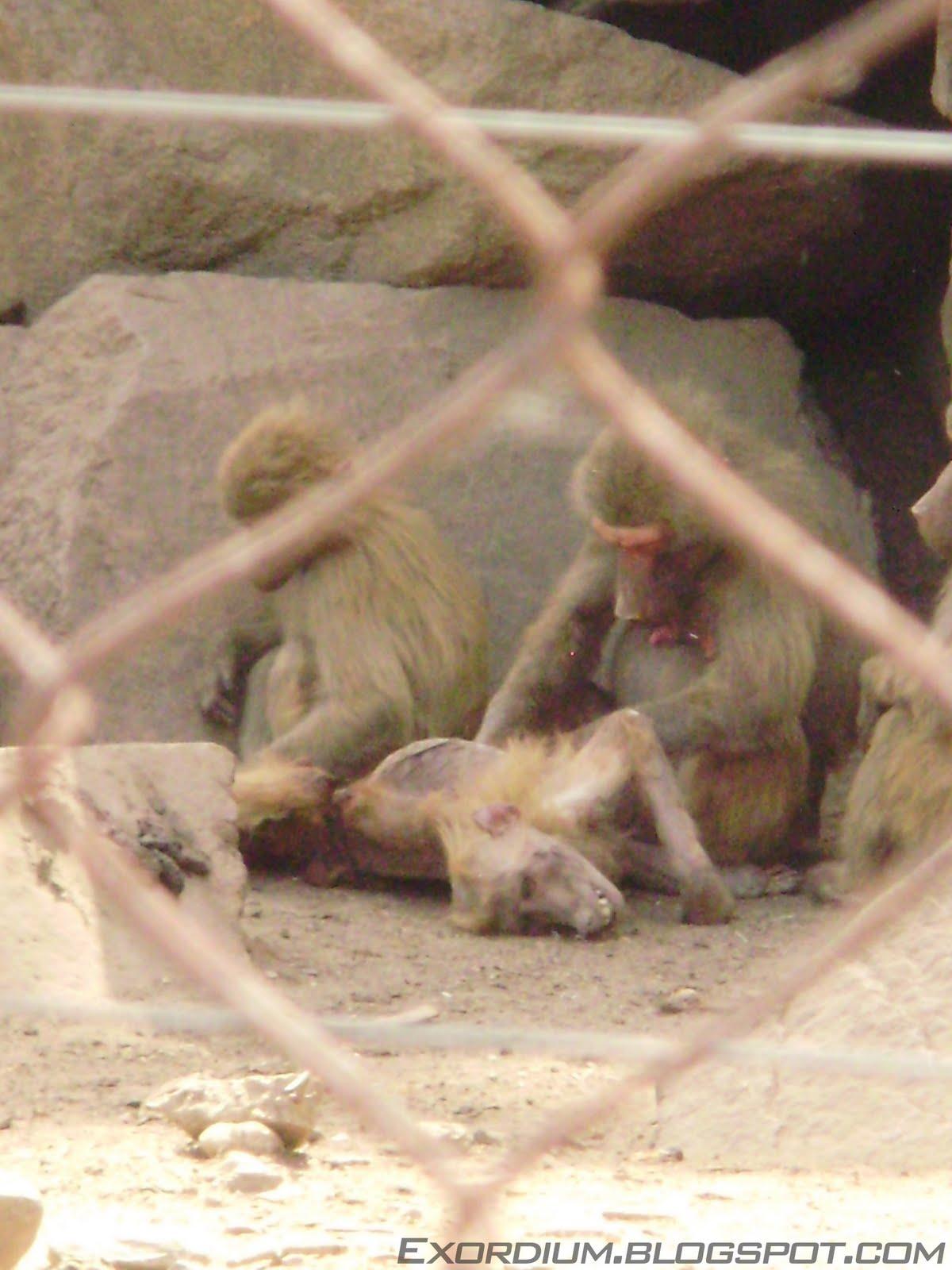 Animales muy monos: fotos - fotos de animales muy monos