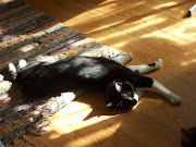 My Cat, Catfish, in a Sunbeam