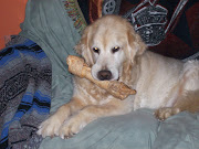 Our Cody and His Valentine's Day Bone on His Couch.