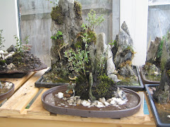 Single Rock planting