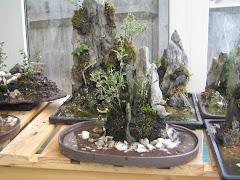 Single Rock planting
