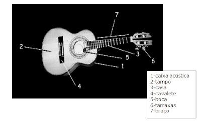 anatomia cavaco