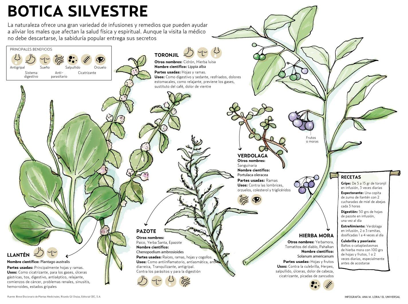 Lora Verde Plantas medicinales