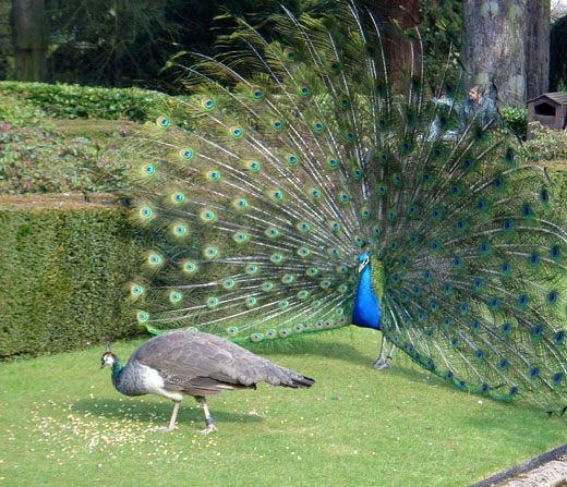 Gangbang hot beach