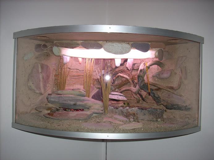 Lampada infrarossi tartarughe elegante illuminazione per rettili