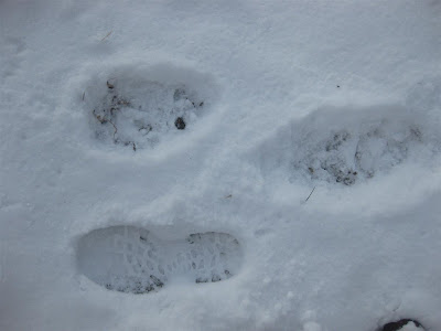 black bear tracks next to my footprint