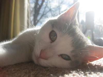 cat, sleeps all day, lies in the sun