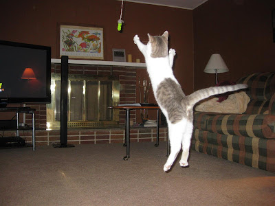 flying cat, kitten, jumping, string