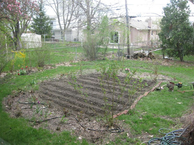 backyard garden rows, hoe, till, rototiller, dirt, soil