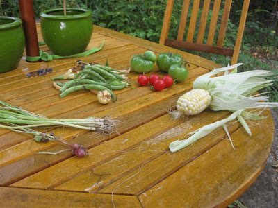 backyard garden harvest, tomato, corn, beans, onion