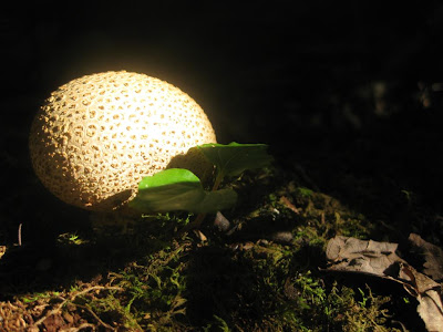 forest mushroom, dark forest with light through the trees