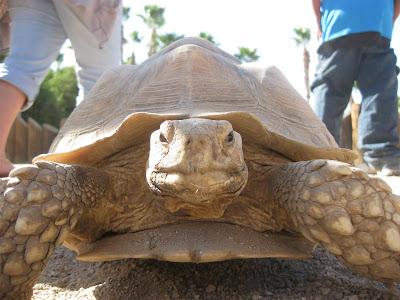 arizona zoo, turtle, petting