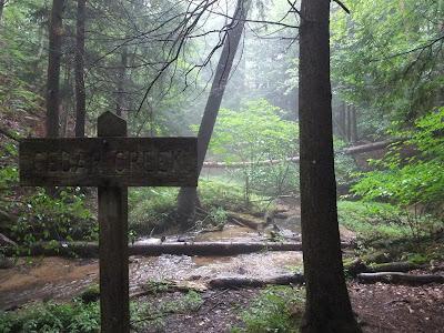 cedar creek trail, manistee forest, path, trail, river
