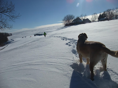 walking with a dog in the snow, sunny day