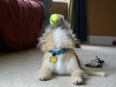 There can never be too many tennis balls!