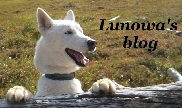 Lunowa's blog