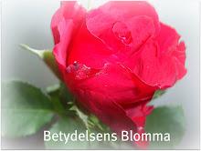 Tack Evelina för Betydelsens Blomma