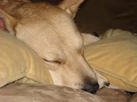 Lola Asleep