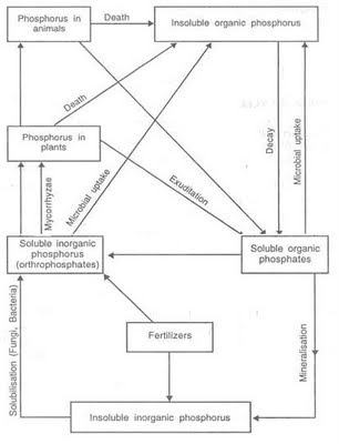 My Scientific Blog Research and Articles BIOGEOCHEMICAL CYCLES