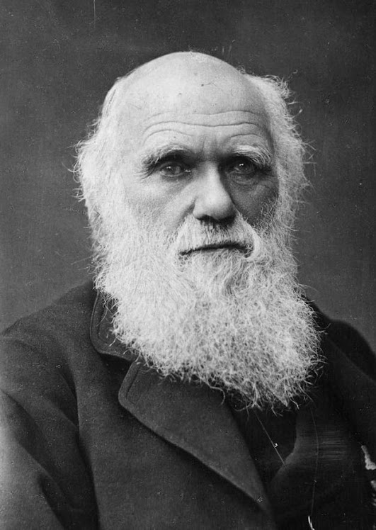 Charles Darwin (1809-1882), British scientist, who laid the foundation of modern evolutionary theor
