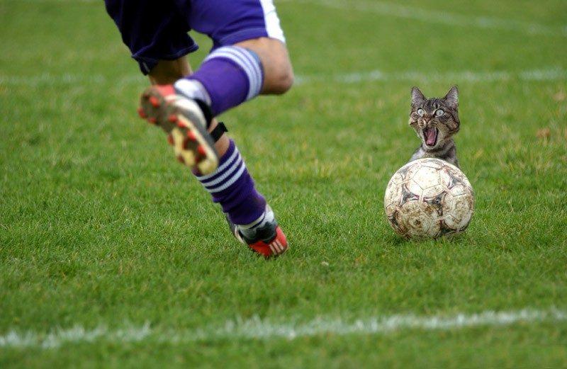 [cat+soccer]