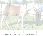Zones of the Horse