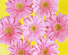 Click On The Pink Daisies to leave 16 Sassy Street a message.