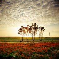 Natureza em paz.