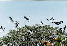 Aves do Araguaia