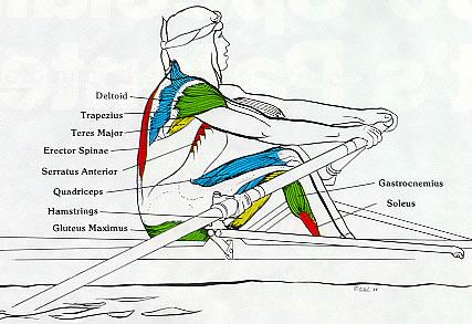 rowing machine injuries