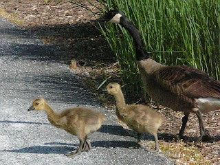 second family crossing the road