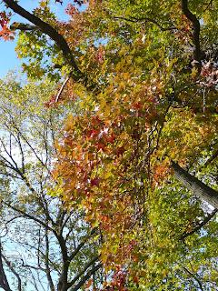 fall comes finally